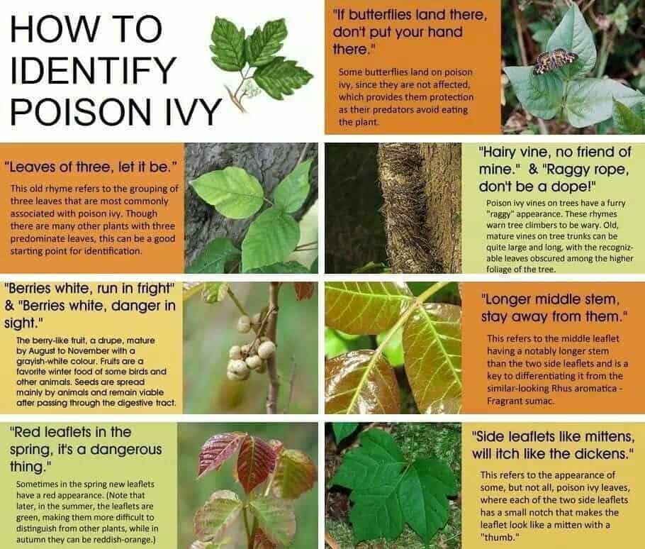 Poison Ivy Graphic | www.streetswander.com